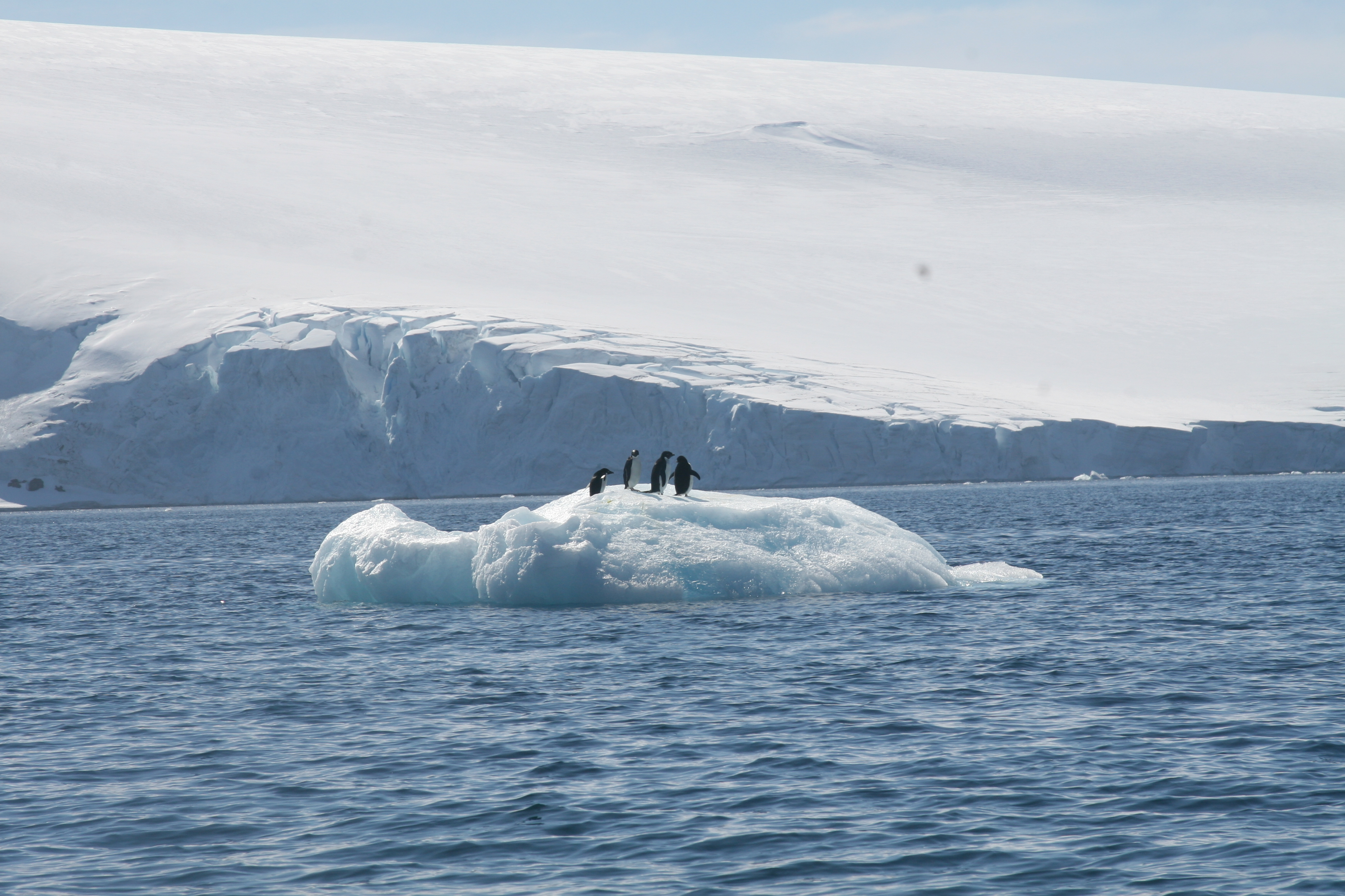 Penguins on an iceberg in Hope Bay, Antarctica (Photo credit: Brian Druker)